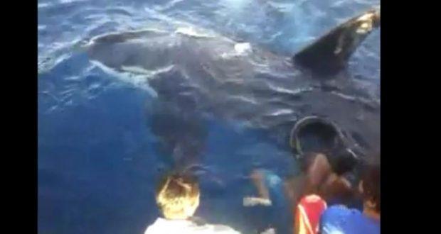 Paus pembunuh atau orca saat dikeluarkan dari jaring nelayan Gorontalo di Teluk Tomini.